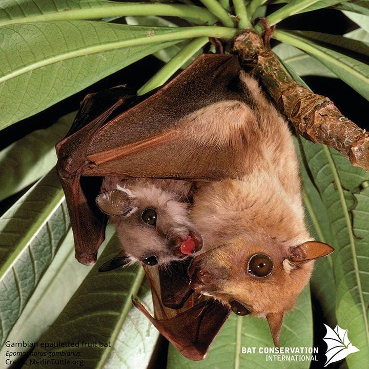 mom bats puppy talk babies