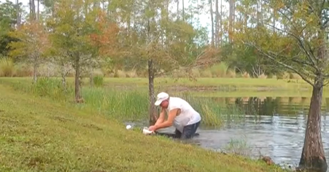 man saves puppy from alligator