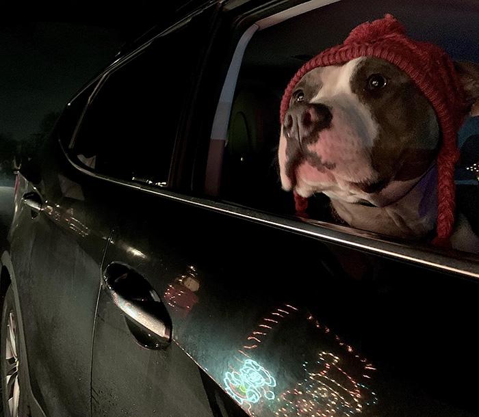 taking the dog to see christmas lights