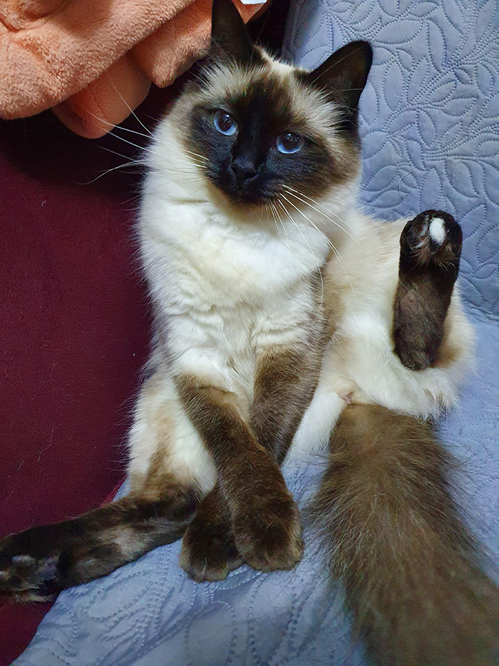 cat white toe