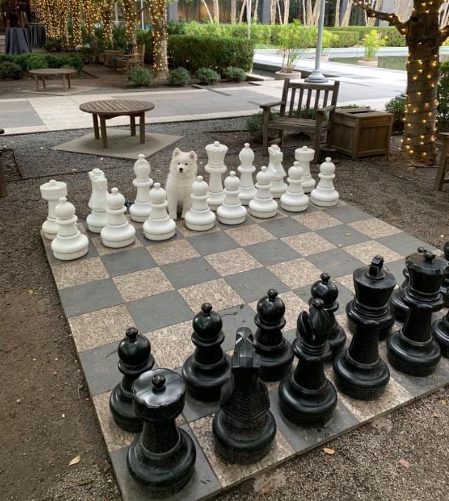 dog king chess