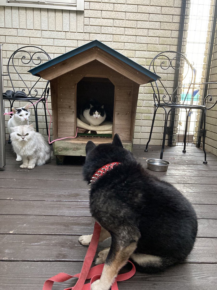 cats steal dog bed