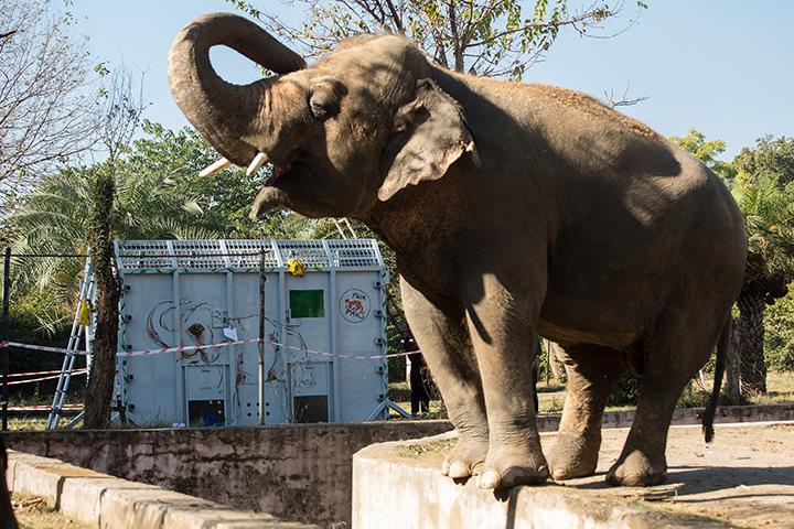 kaavan elephant update