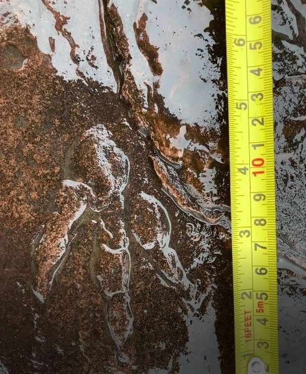 girl finds dinosaur fossil