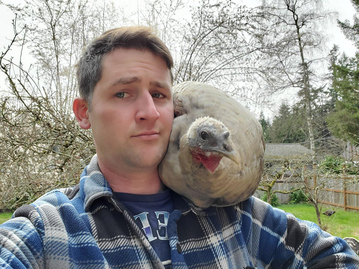 shoulder turkey