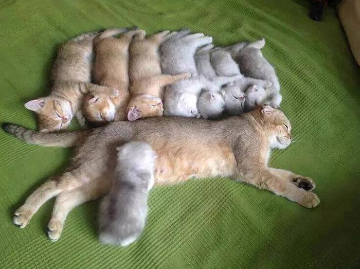 kitten family