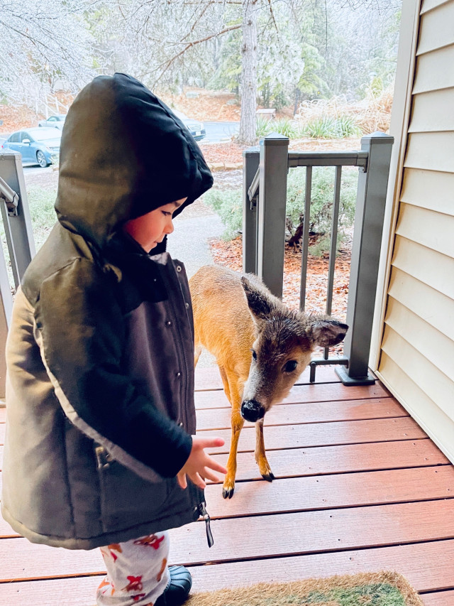4 year old comes home with deer