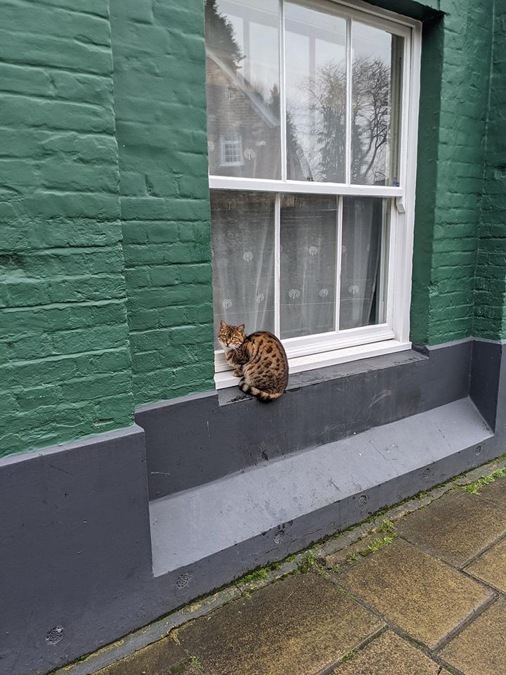 cat funny story