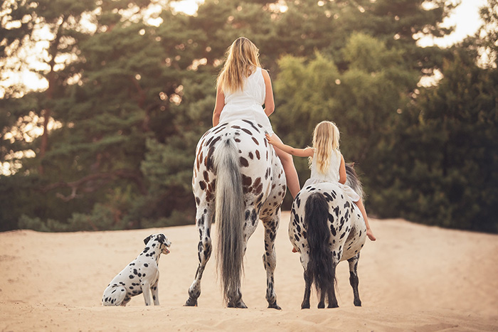 spotted horse pony and dog