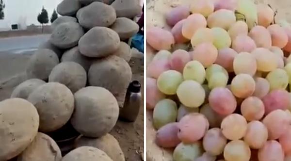 gangina grapes