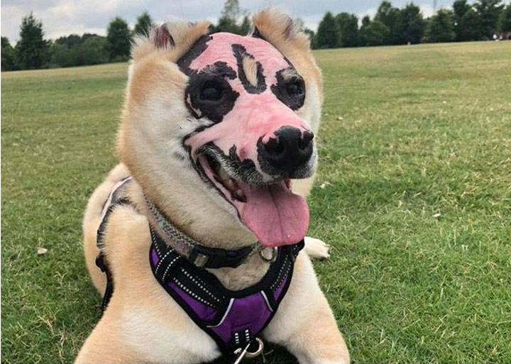 dog burned in fire therapy dog