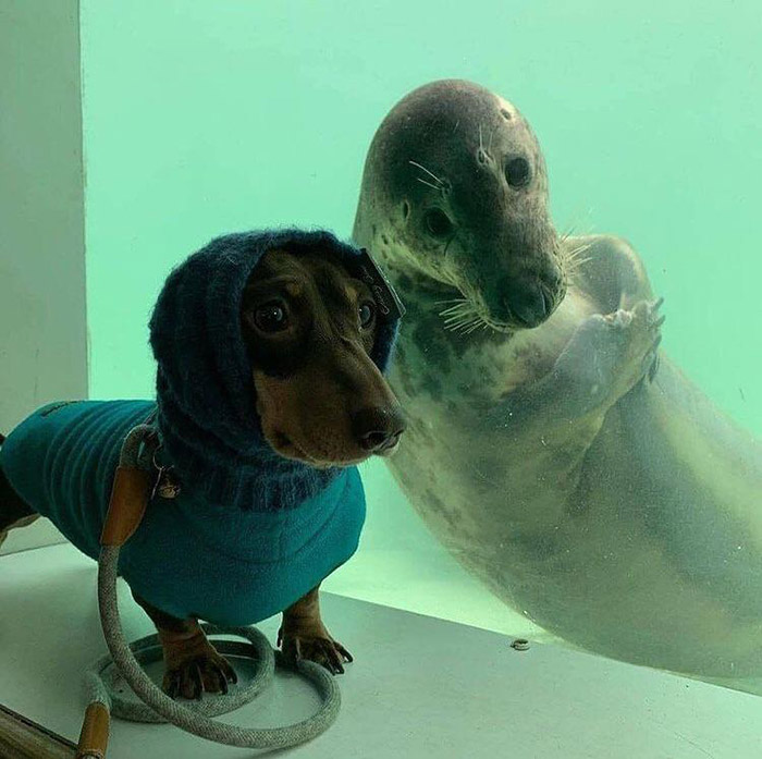 land dog and water dog