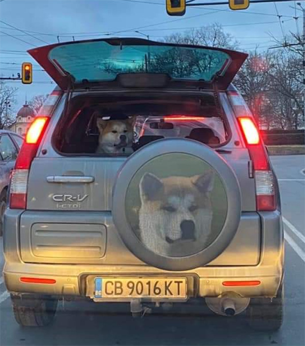 dog on wheel cover
