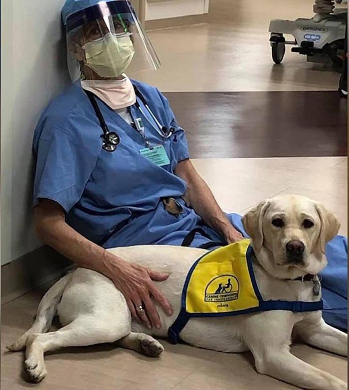 service dog Wynn