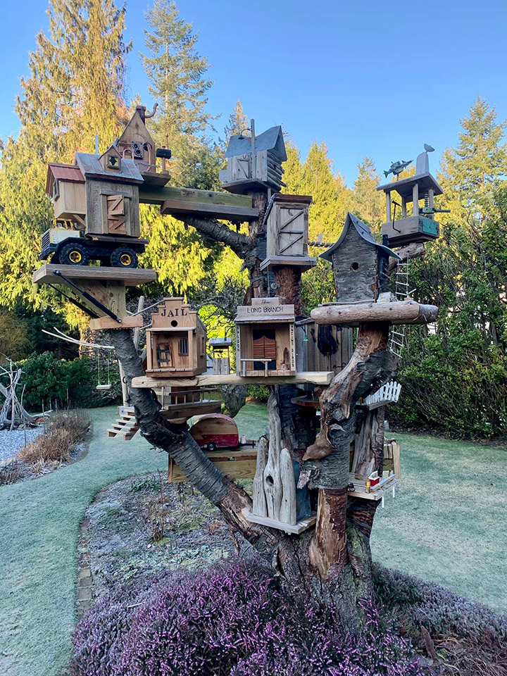 amazing bird house
