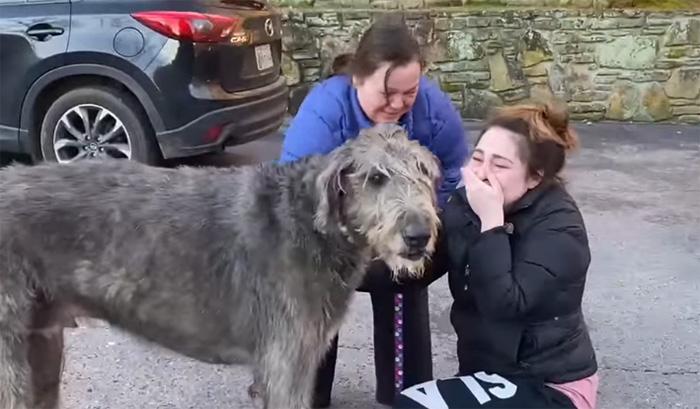 fergus dog reunited with family
