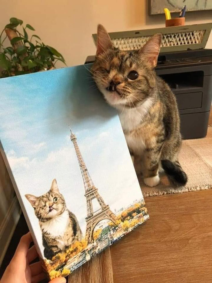 wholesome cat painting