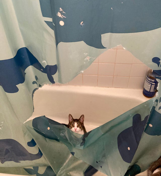 cat caught in the act