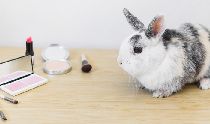 Virginia bans animal testing cosmetics