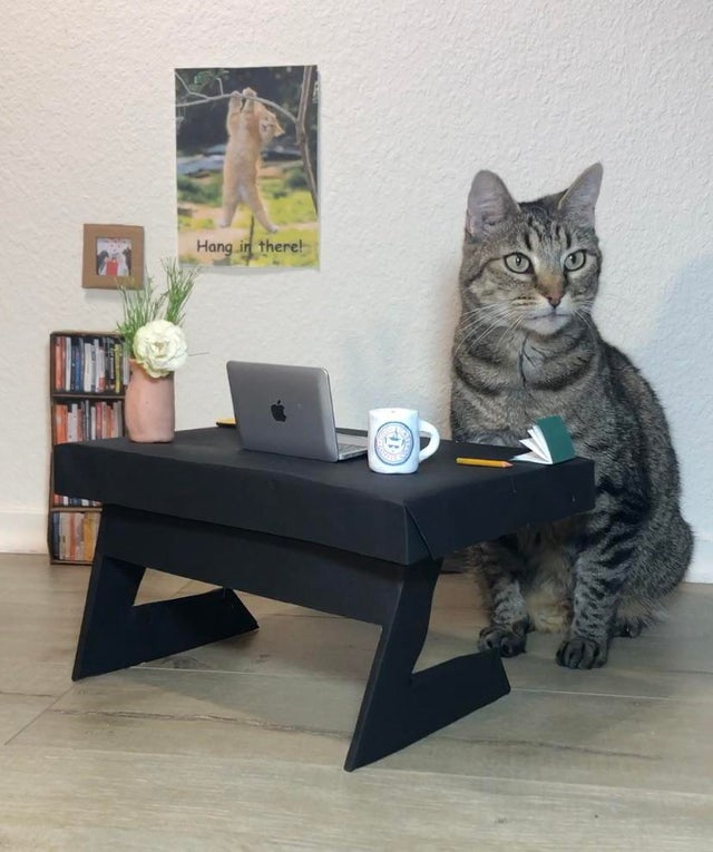 cat home office