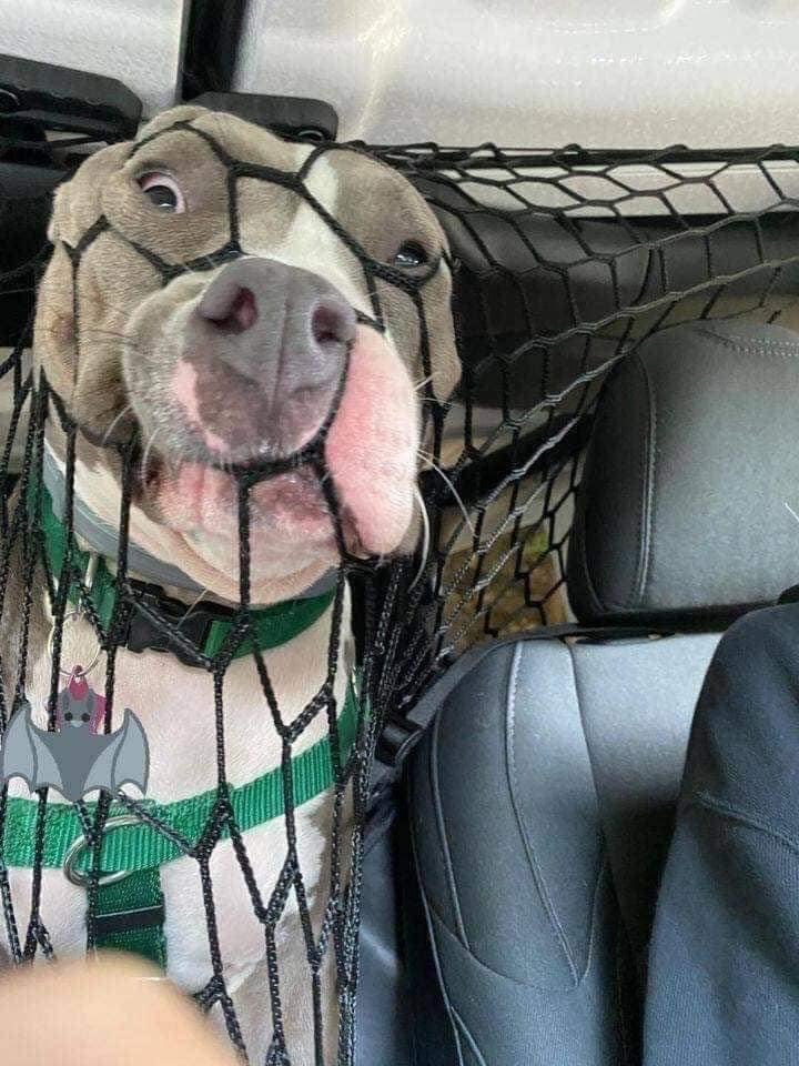 dog net distraction driving