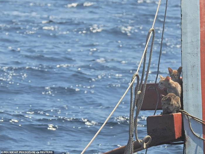 sailors rescue cats sinking ship