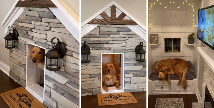 amazing dog house in wall