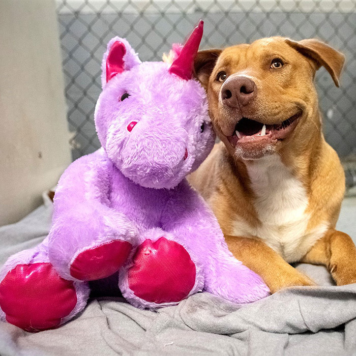 dog unicorn plush toy