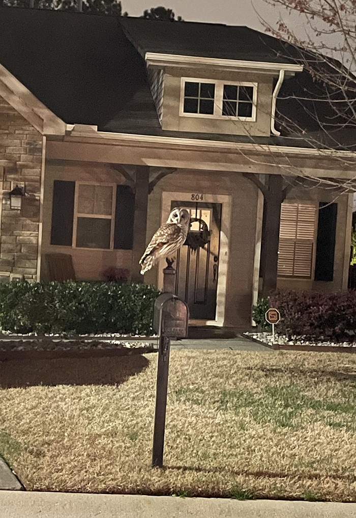 owl on mailbox