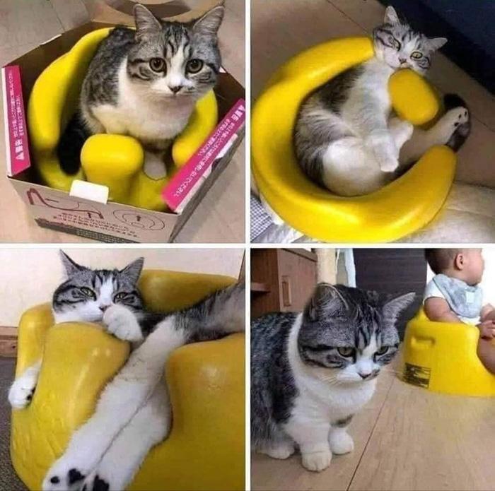 cat in bumbo