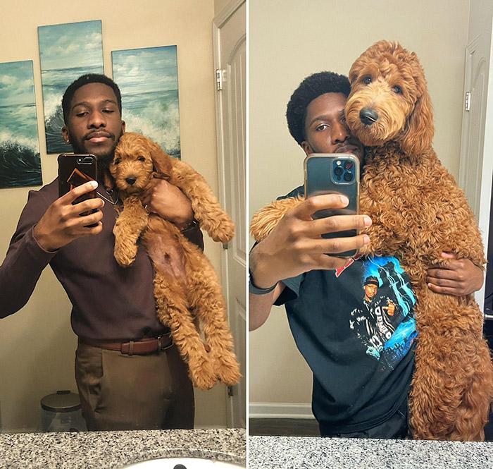 8 weeks vs 8 months dog