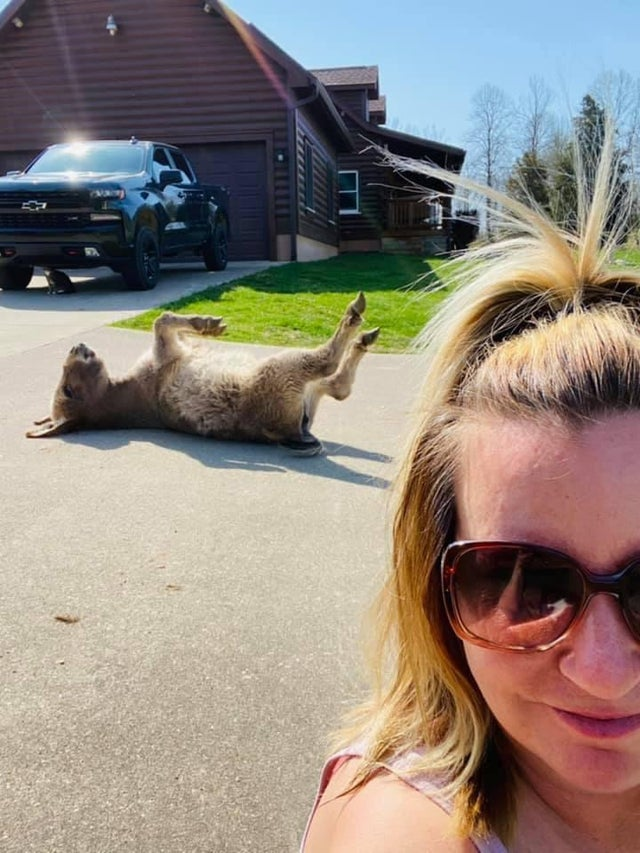 donkey enjoying the sun