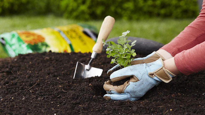 reasons gardening is good for your health