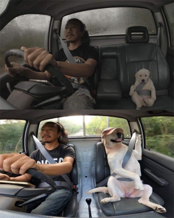 man and dog driving together