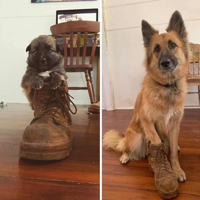 dog boot