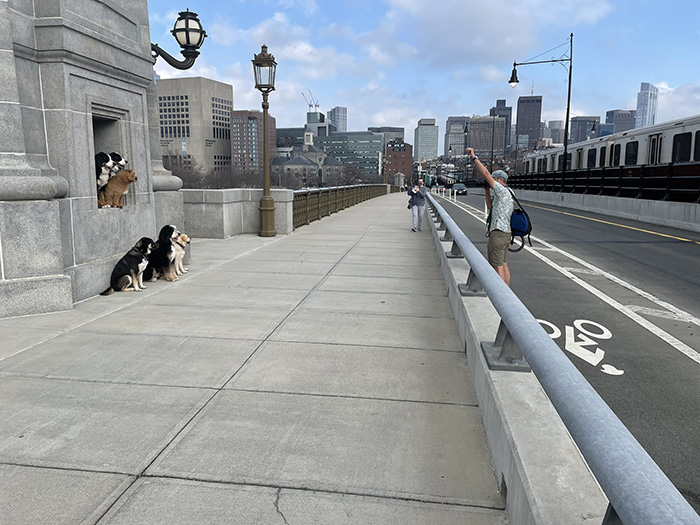 dog walker photo of dogs on Longfellow Bridge