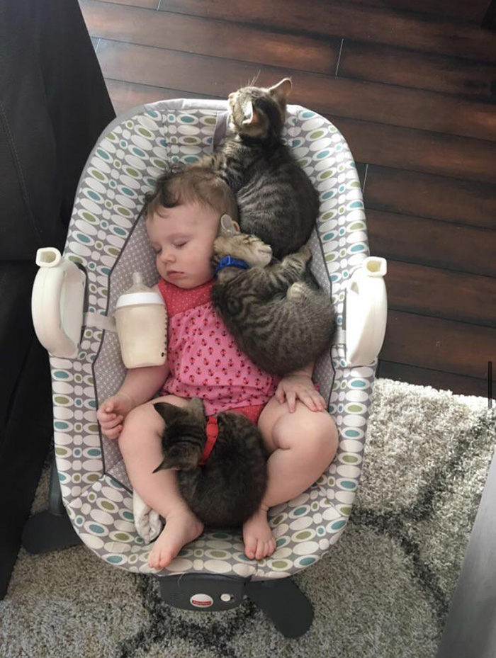 kittens sleeping with baby