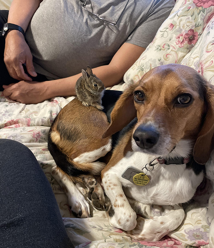 dog brings back bunny from park