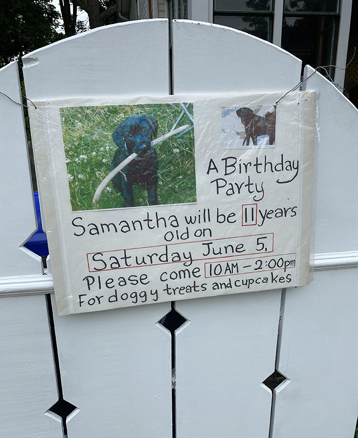 dog bday party