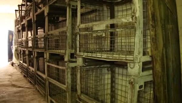 caged farming ban