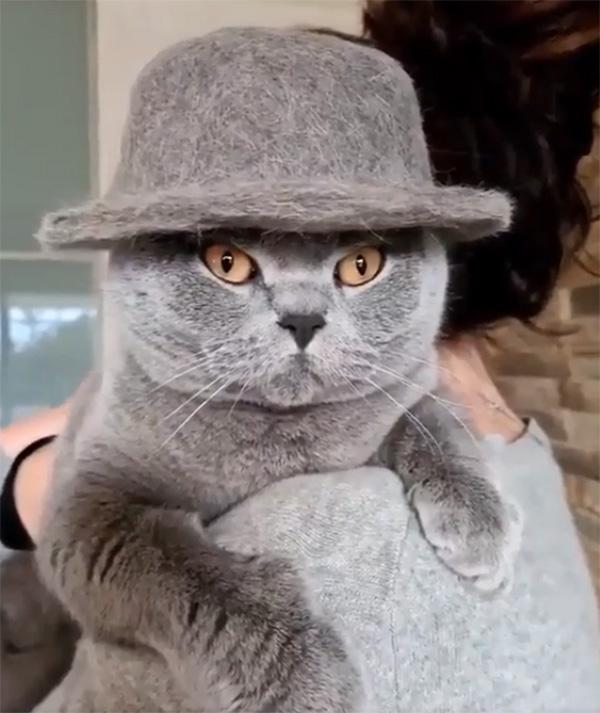 fancy cat in hat