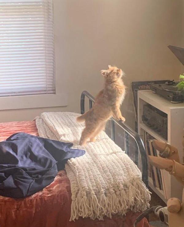cat having a moment