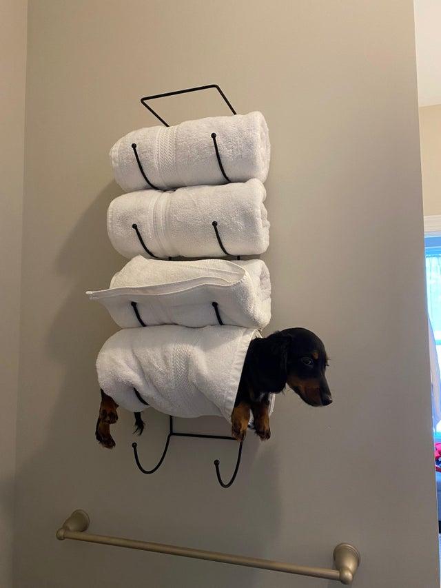 wiener dog towel rack