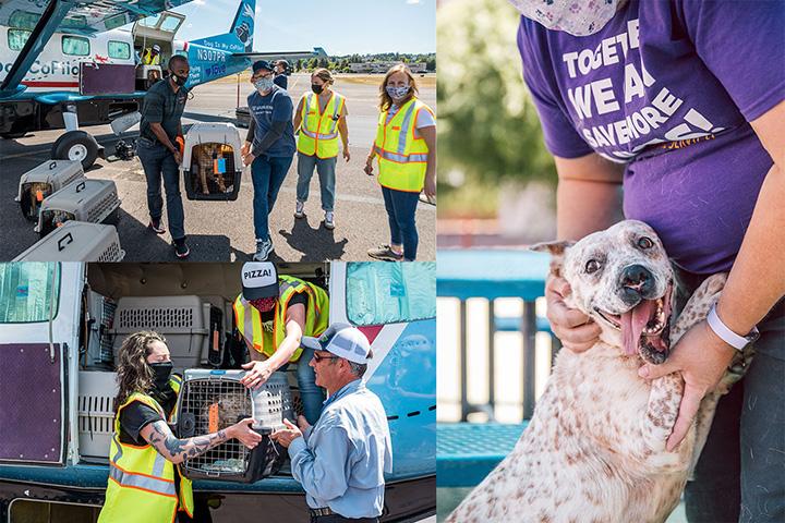 wondercide and dogcopilot rescue