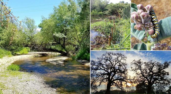 beavers restore doty ravine