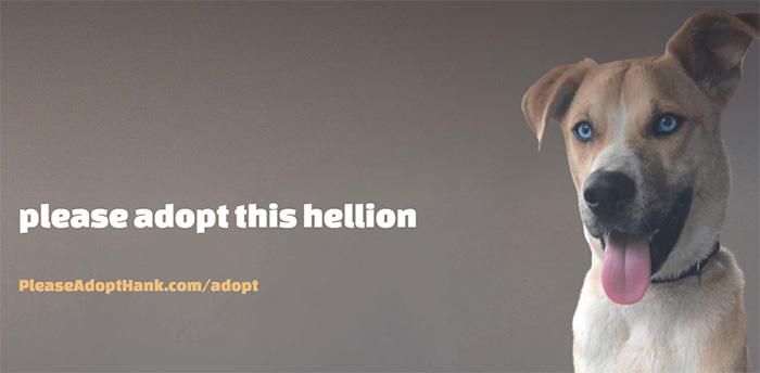 please adopt hank website