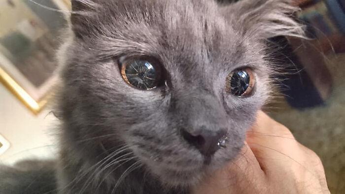 cat eye broken glass