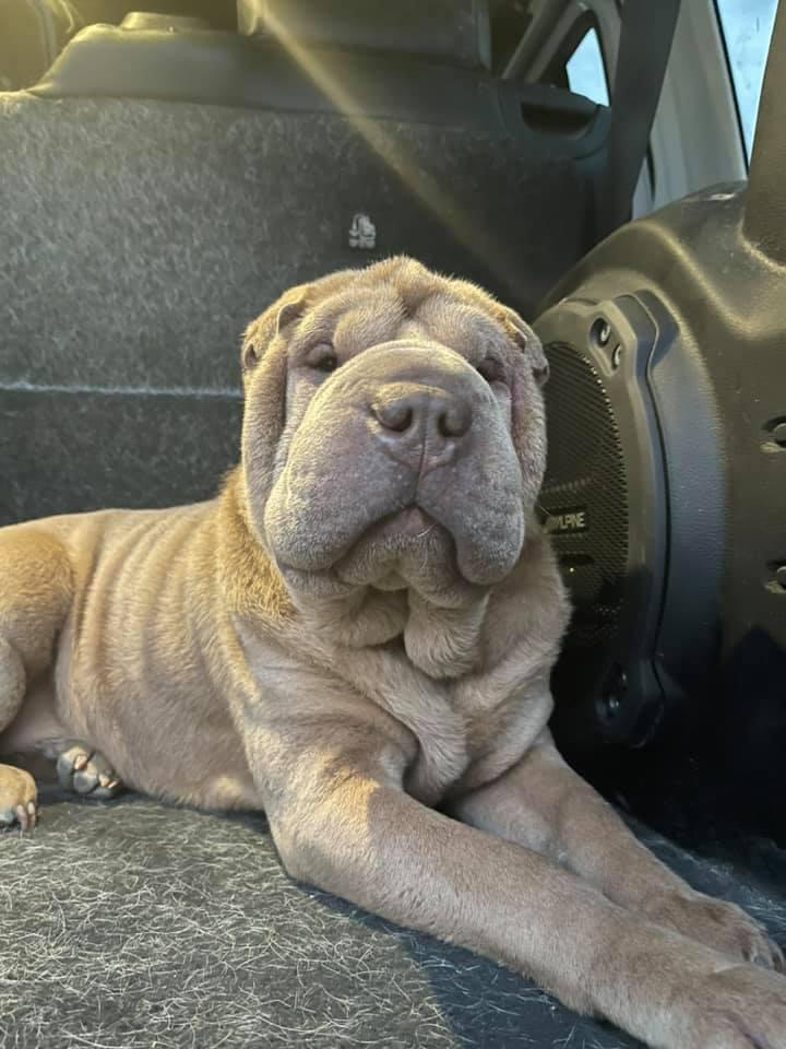 missing dog found rehab