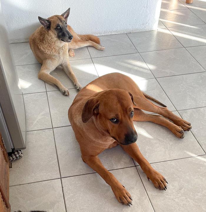 judgemental dogs