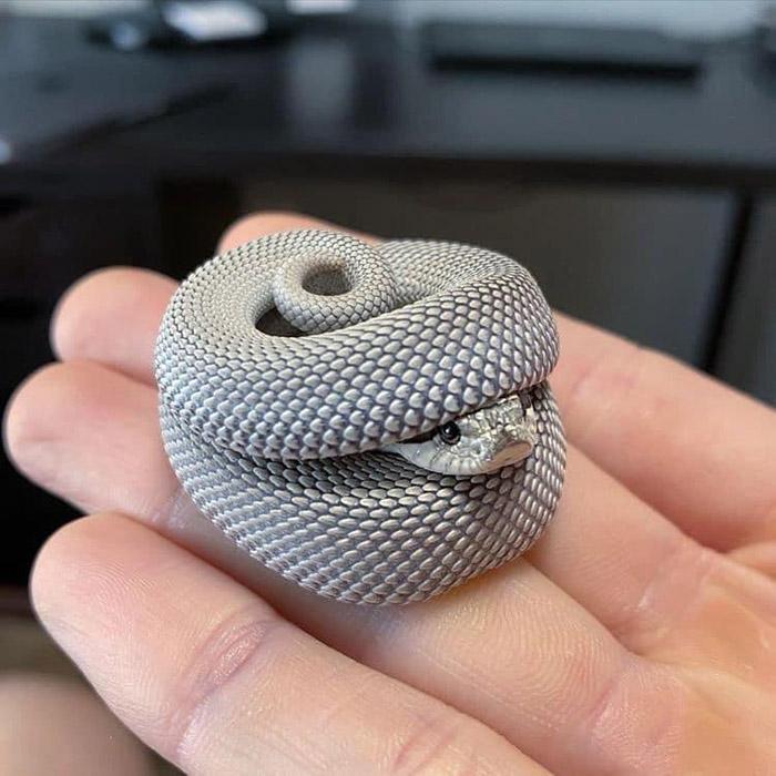snake in tiny hat